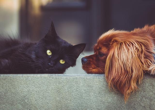 Cum iti protejezi animalele de sarbatori