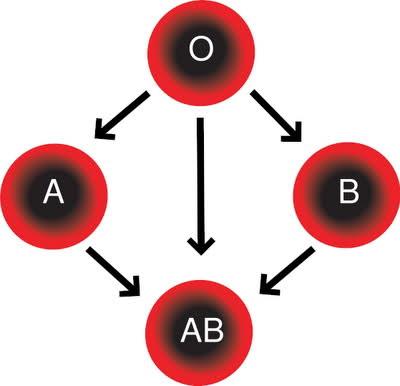 5 lucruri noi pe care grupa de sange le dezvaluie despre tine