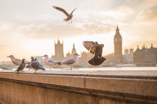 TOP obiective turistice din Londra