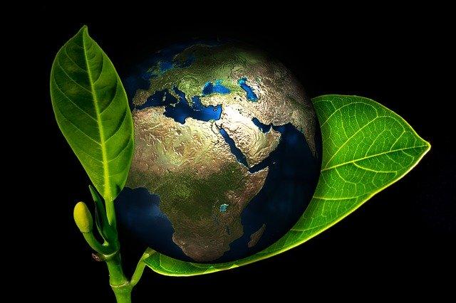 Cum sa fii mai prietenos cu mediul - solutii eco