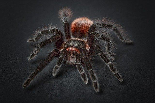 Arahnofobia – Care sunt cele mai intalnite simptome?