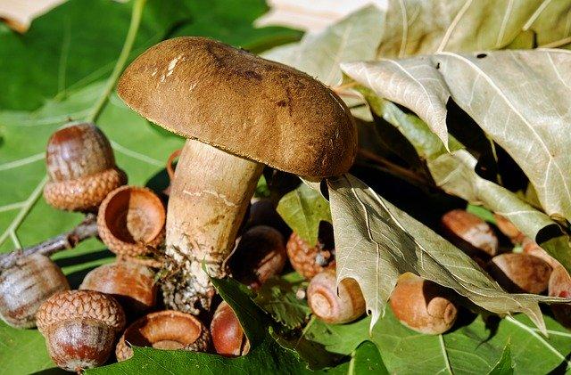 5 preparate in care poti adauga ciuperci