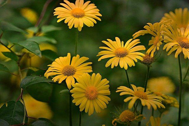 Plante medicinale pentru tratarea afectiunilor pulmonare