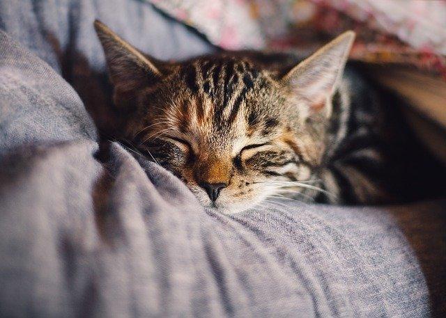 5 metode pentru a adormi mai usor