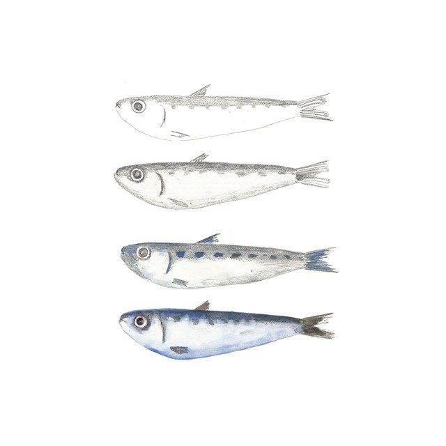 Reteta pentru pranz, de vara. Salata greceasca cu sardine.