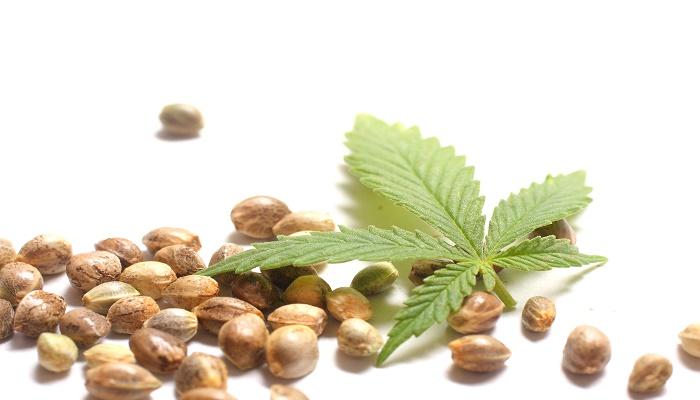 5 beneficii pentru sanatate ale semintelor de canepa