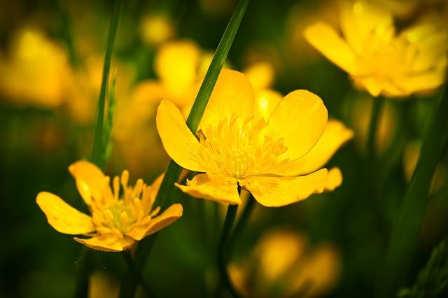 Efectele benefice ale plantei de rostopasca