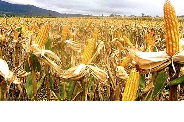 Cat de mare este pericolul sa murim de foame?