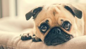 10 mituri despre animale in care nu ar trebui sa mai crezi