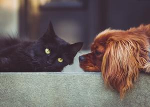 5 Moduri in care animalele de companie aduc un plus starii tale de bine