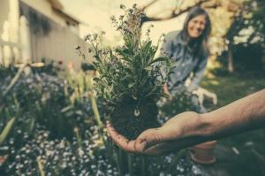 4 Beneficii ale gradinaritului pentru sanatatea mentala