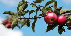 Suc de mere- top 5 beneficii pentru sanatate