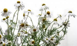 Remedii naturale pentru a reduce iritatiile de dupa epilare