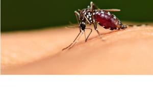 Boala care ameninta jumatate din populatia lumii