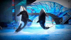 Cele mai spectaculoase acvarii din lume