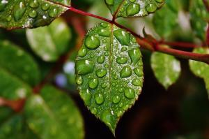 Cum poti recicla si folosi eficient apa de ploaie?