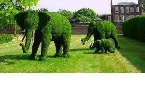 Noua tendinta in decoratiuni exterioare: topiary
